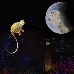 Monkey moon